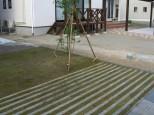 緑化カースペース