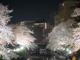夜桜 松川 さくら