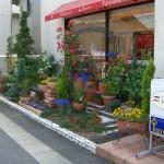 ローズアーチの花壇