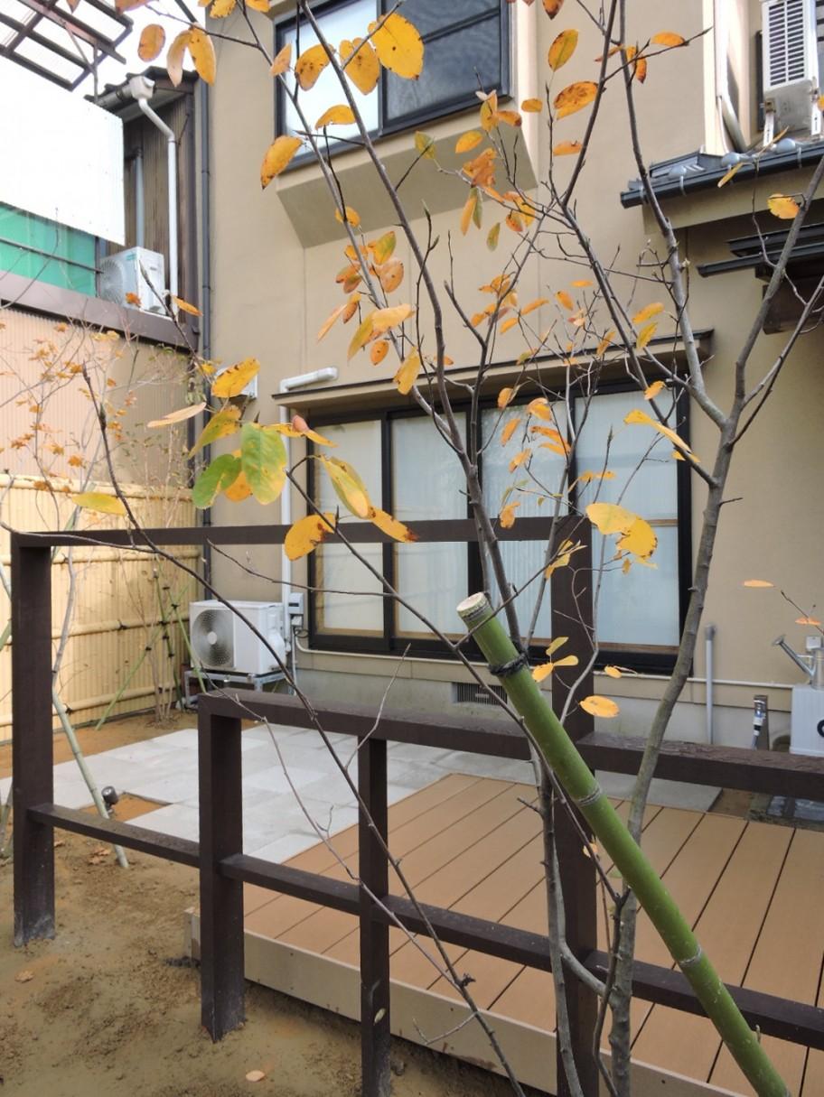 アレンジフレーム 植栽 シンボルツリー