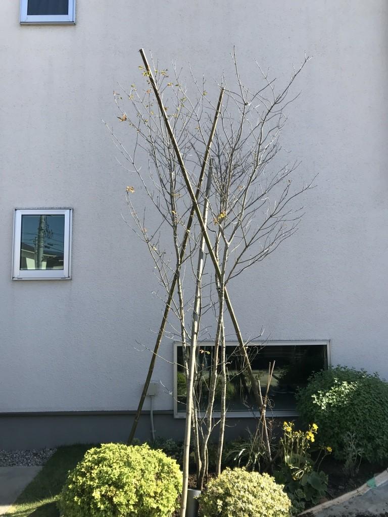 支柱 シンボルツリー