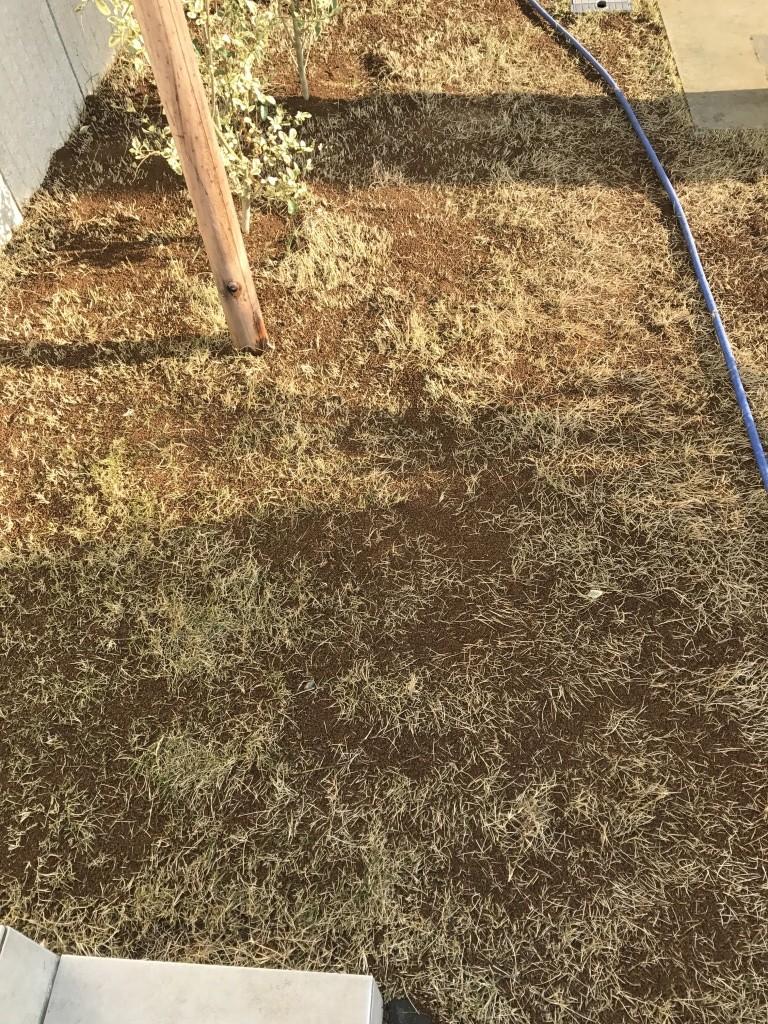 施肥 目土入れ 水撒き