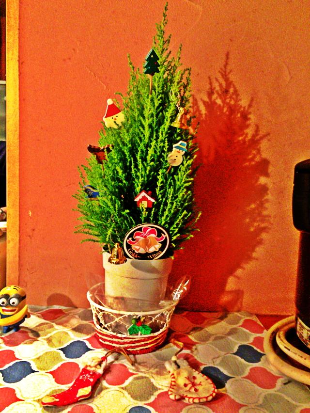 コニファー クリスマスツリー