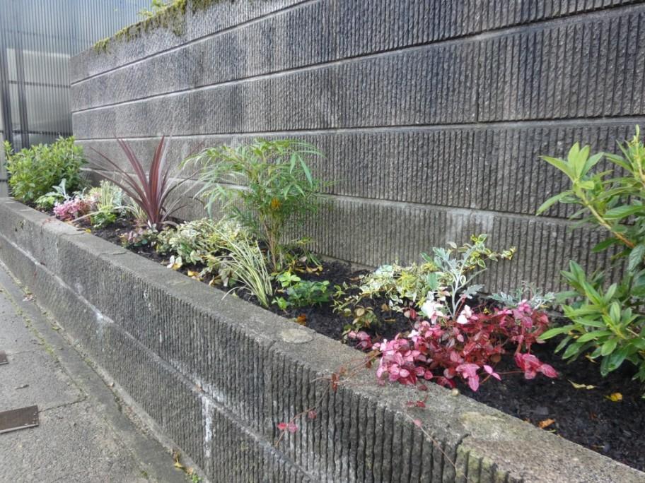 花壇 カラーリーフ