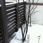 事務所の雪