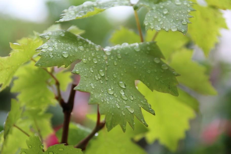 leaves-168761_960_720